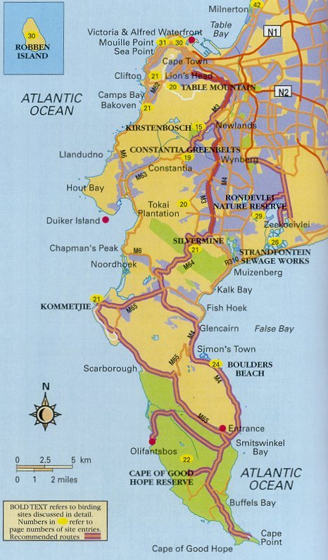 Western Cape Birding Route bird watching on The Cape Peninsula